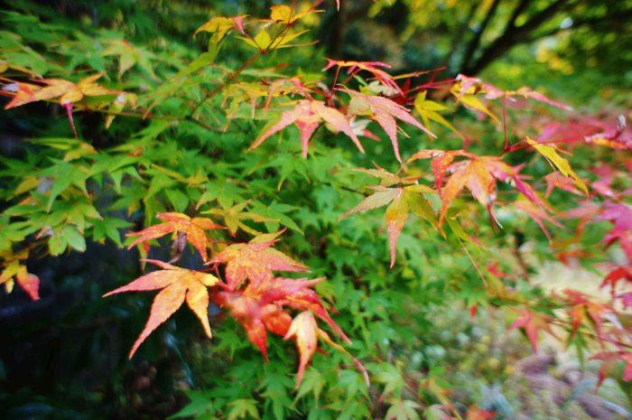 Fukuchiyama hiking autumn leaves