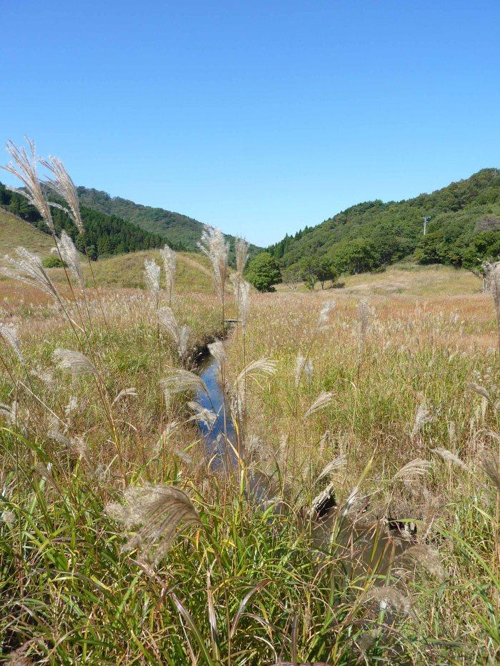 More silver grass