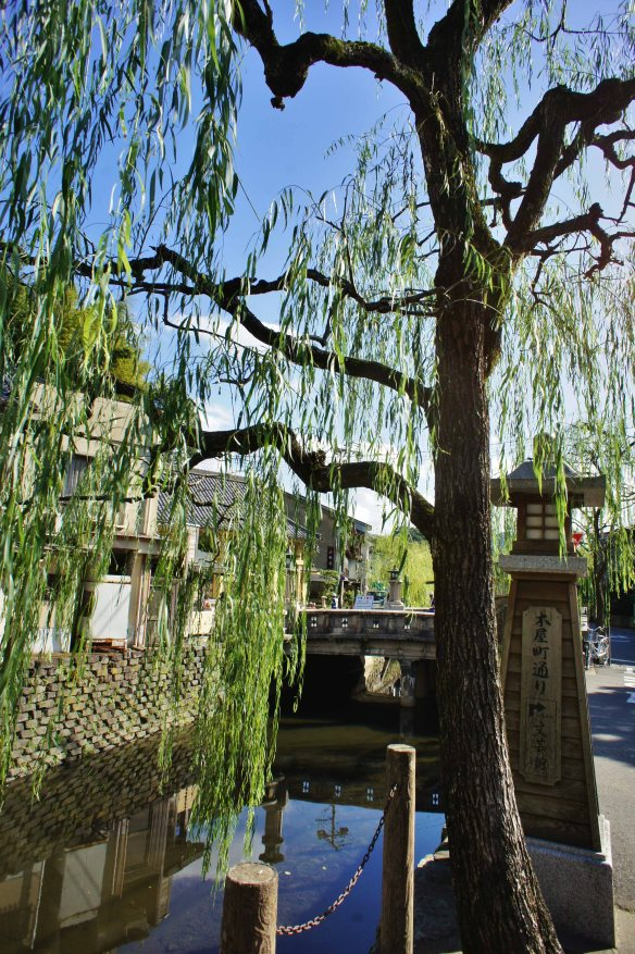 Kinosaki willows