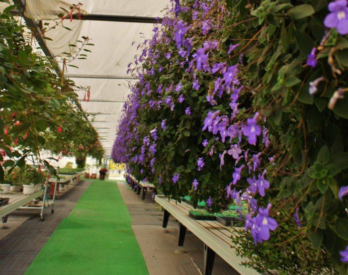 Parchez greenhouse